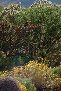 Historic US Route 89, Pinal Pioneer Parkway, Arizona, Spring Flowers