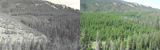Little Belt Mountains, Montana 1984 &2009