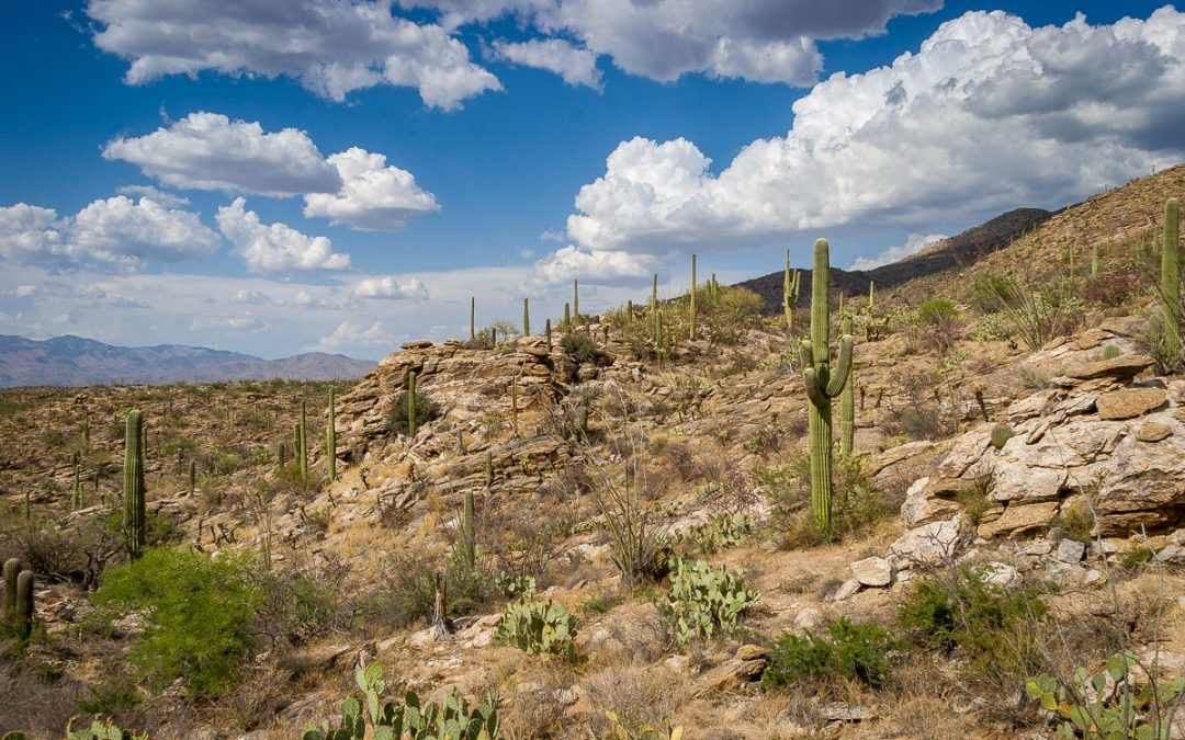 Tucson to Apache Junction