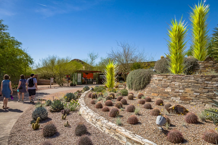Desert Botanical Garden, Phoneix, Arizona