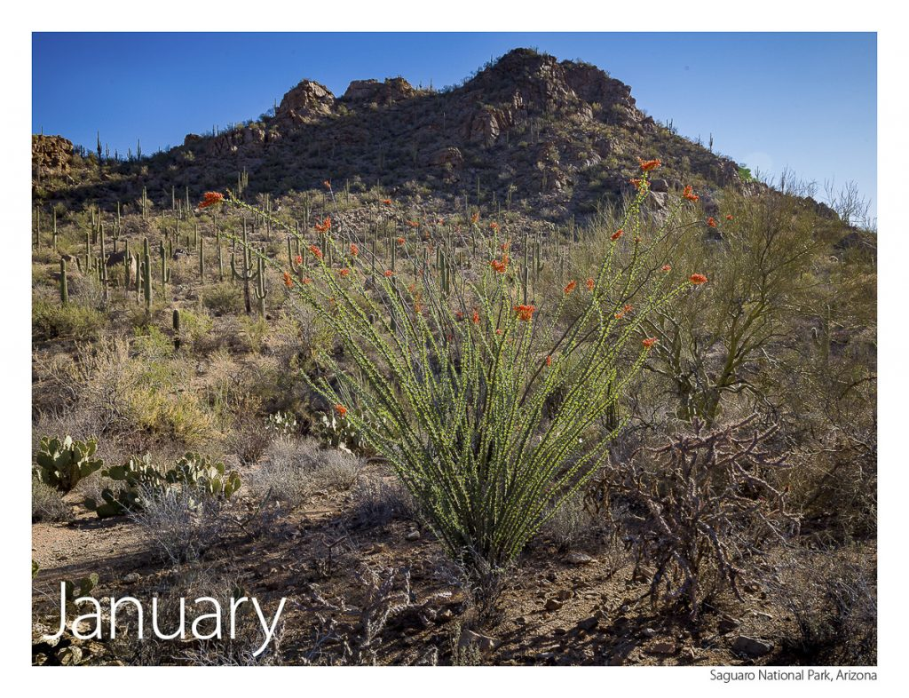 US Route 89 2019 Calendar January-Sagurao National Park