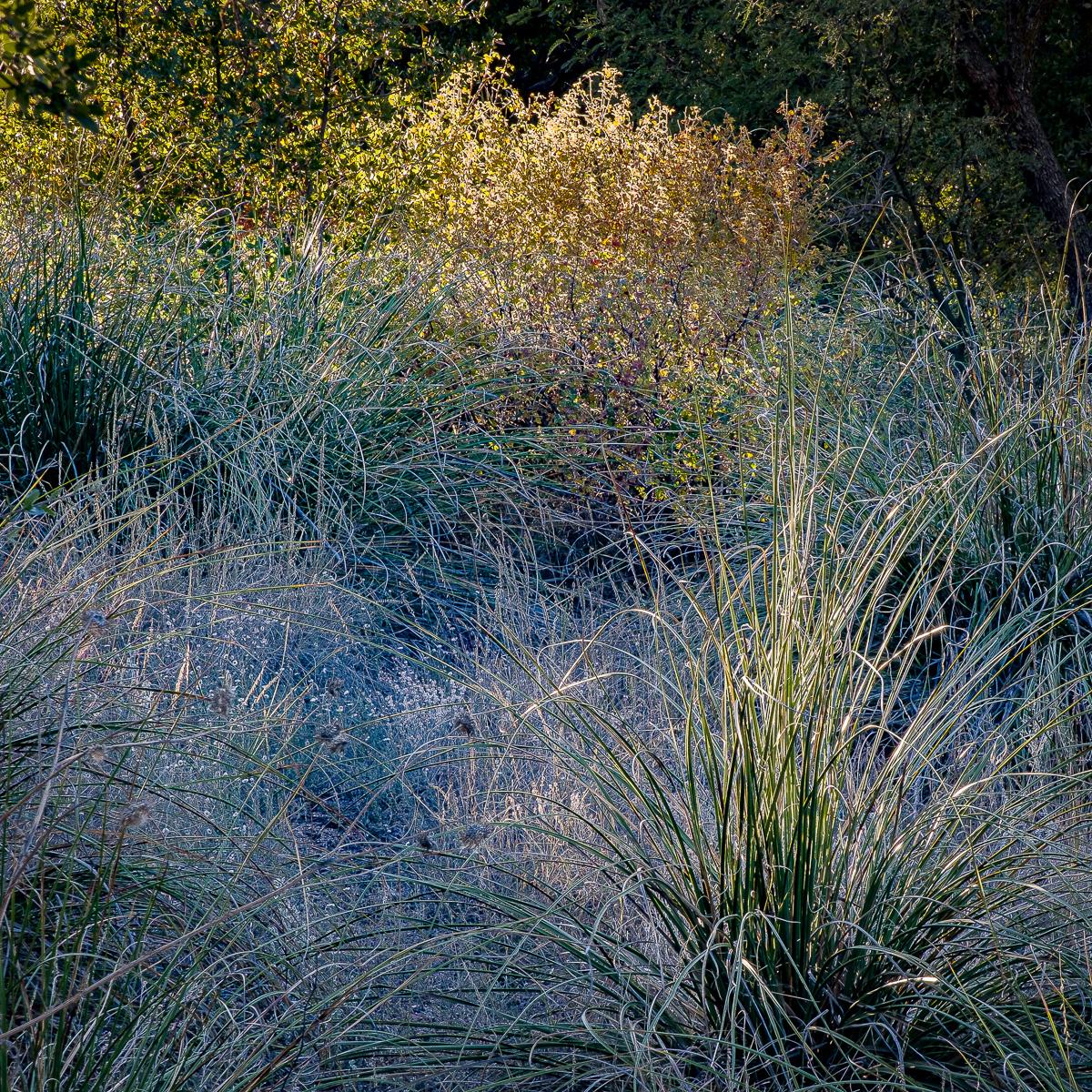 In An Oracle Woods 2021 Calendar-April-James Cowlin Photographs