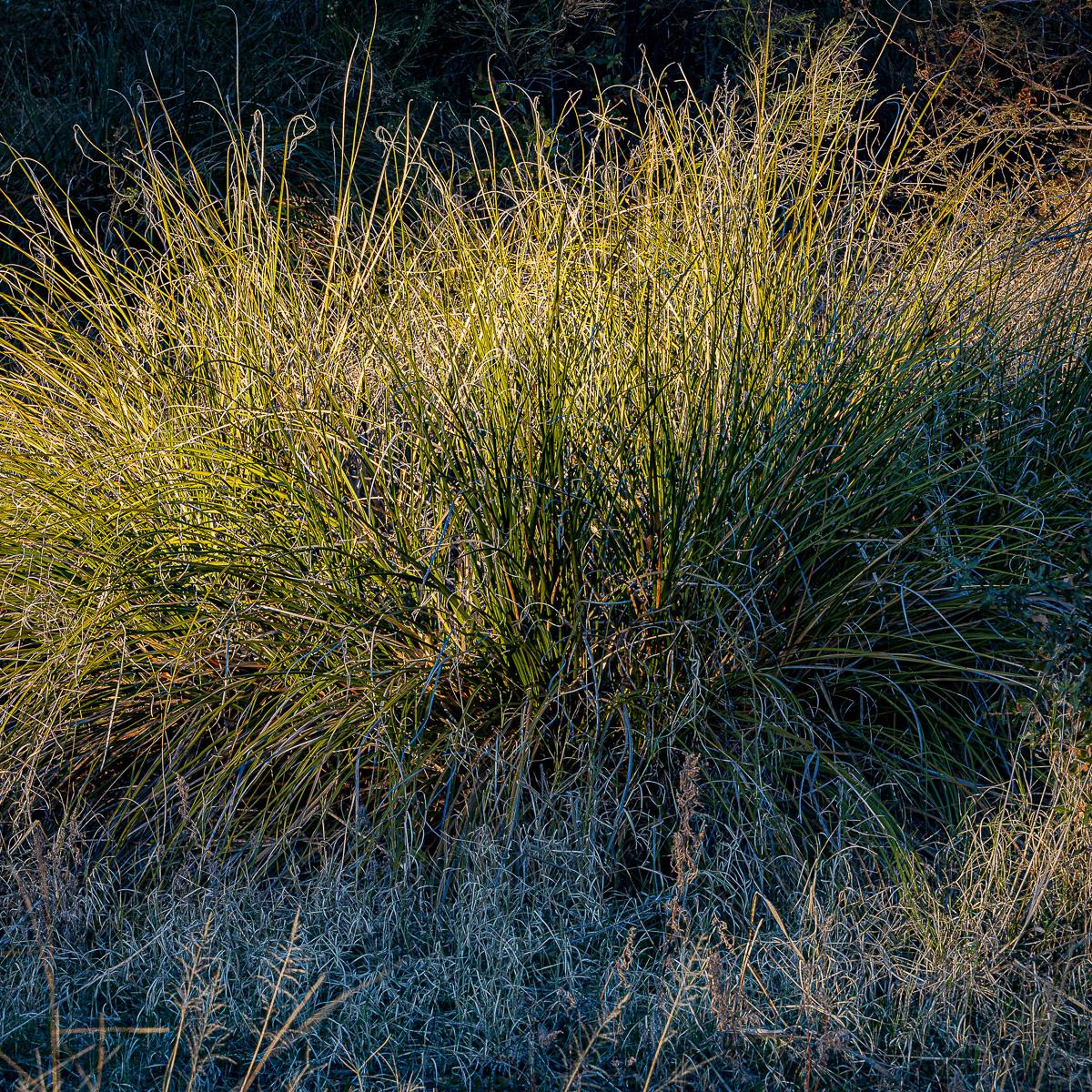 In An Oracle Woods 2021 Calendar-August-James Cowlin Photographs