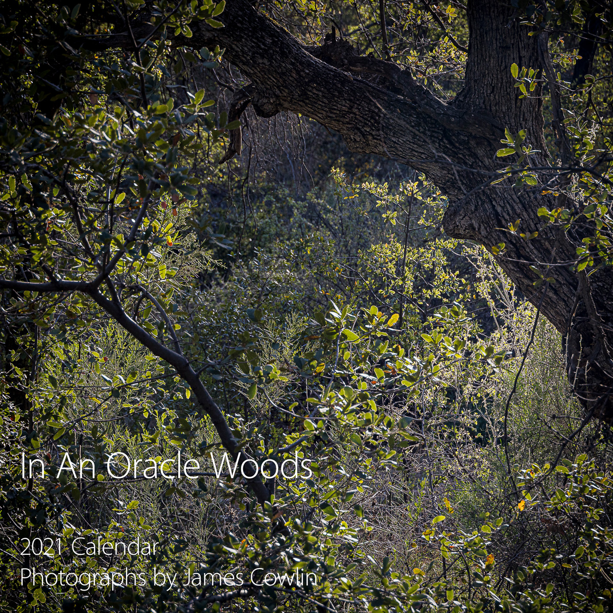 In An Oracle Woods 2021 Calendar-Cover-James Cowlin Photographs
