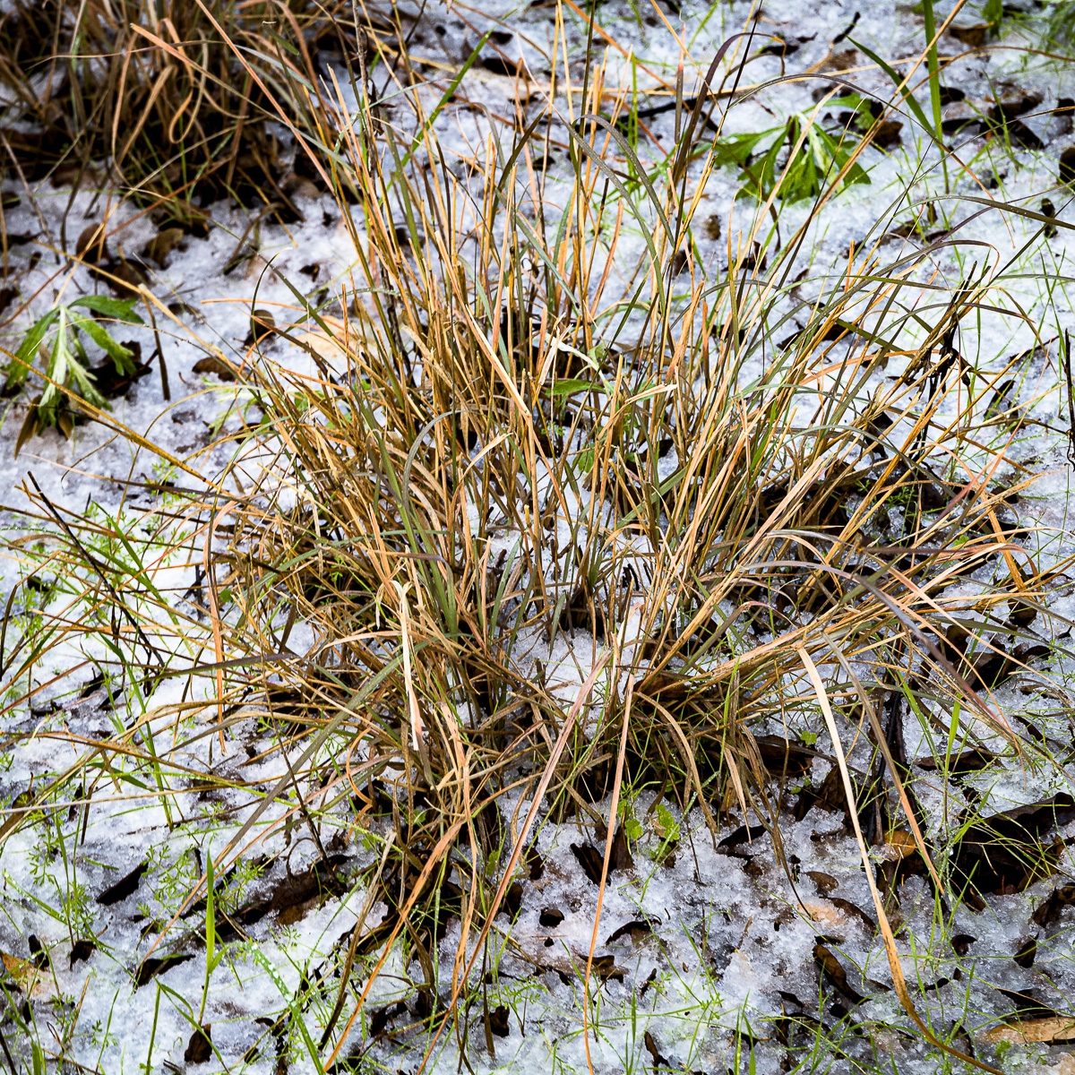 In An Oracle Woods 2021 Calendar-December-James Cowlin Photographs