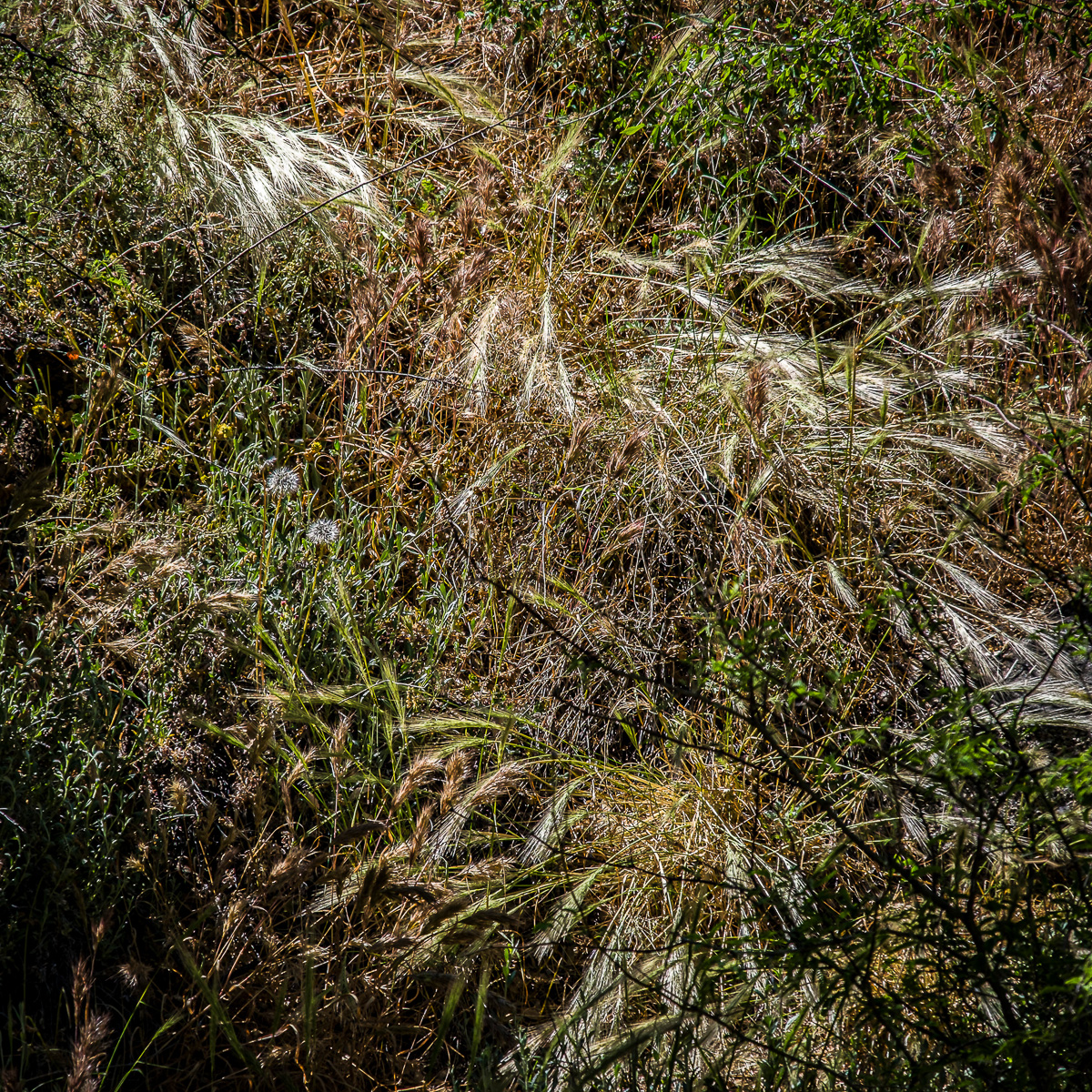 In An Oracle Woods 2021 Calendar-February-James Cowlin Photographs