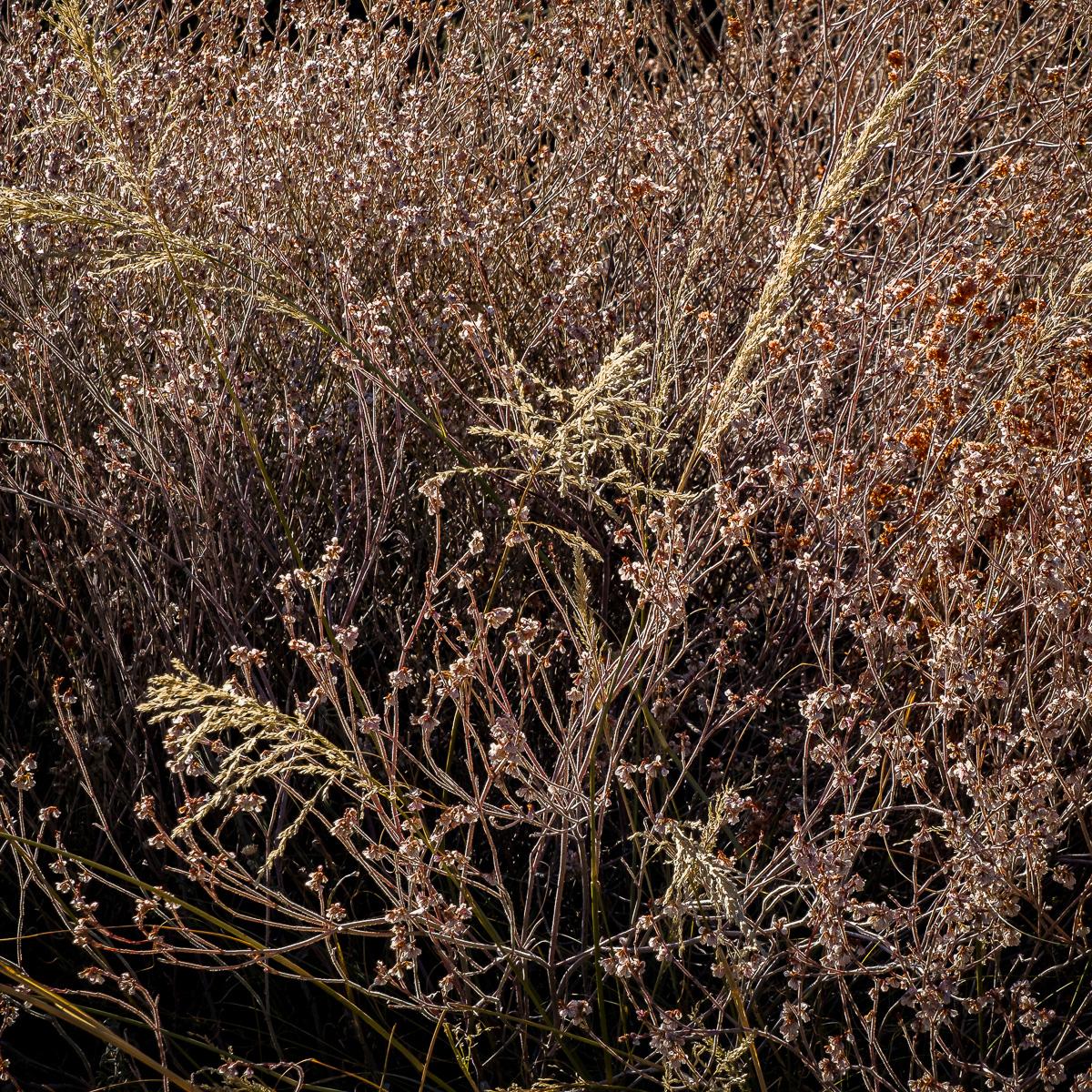 In An Oracle Woods 2021 Calendar-January 2022-James Cowlin Photographs