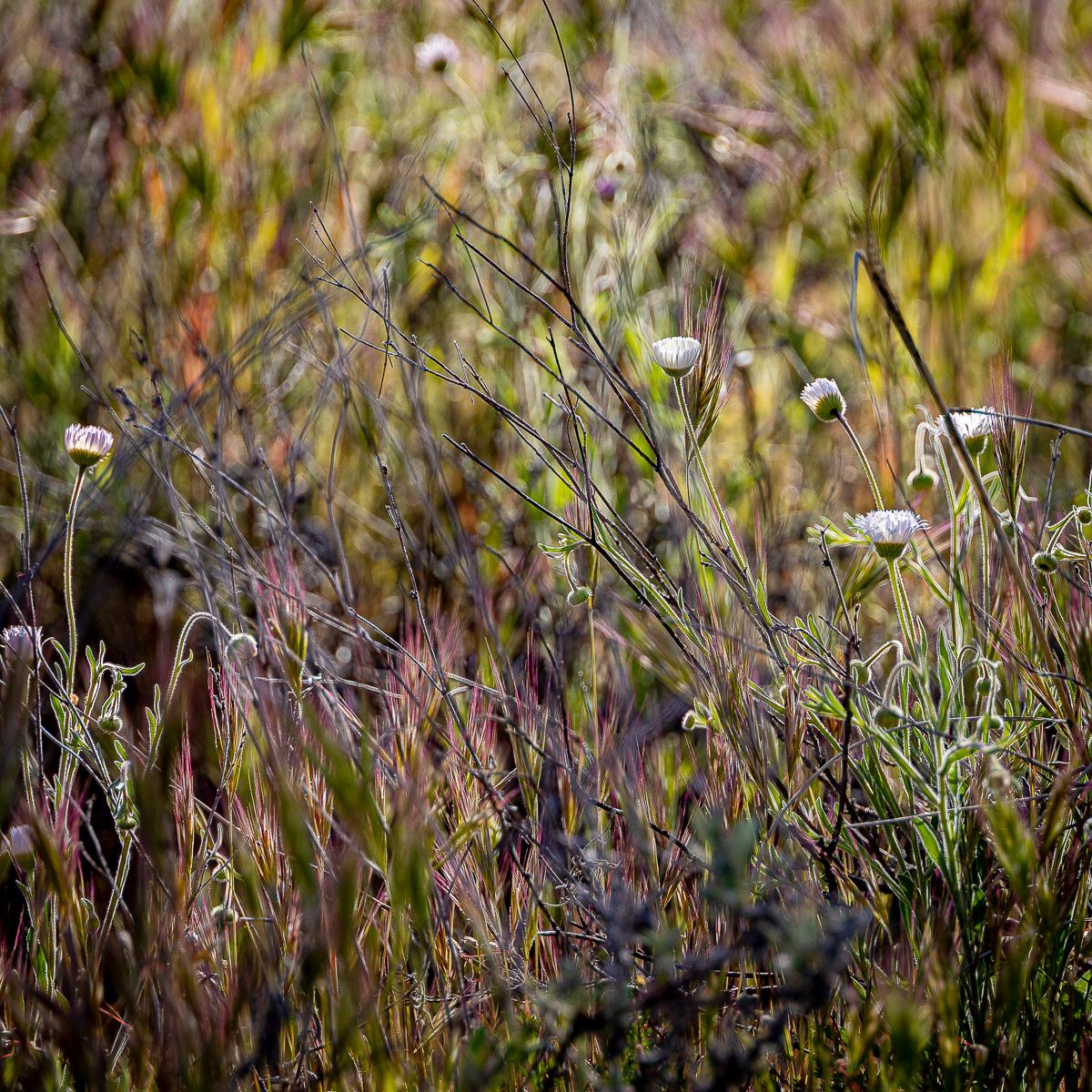 In An Oracle Woods 2021 Calendar-January-James Cowlin Photographs
