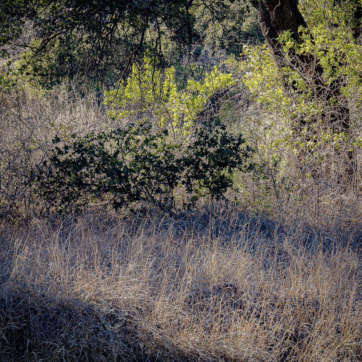 In An Oracle Woods 2021 Calendar-July-James Cowlin Photographs
