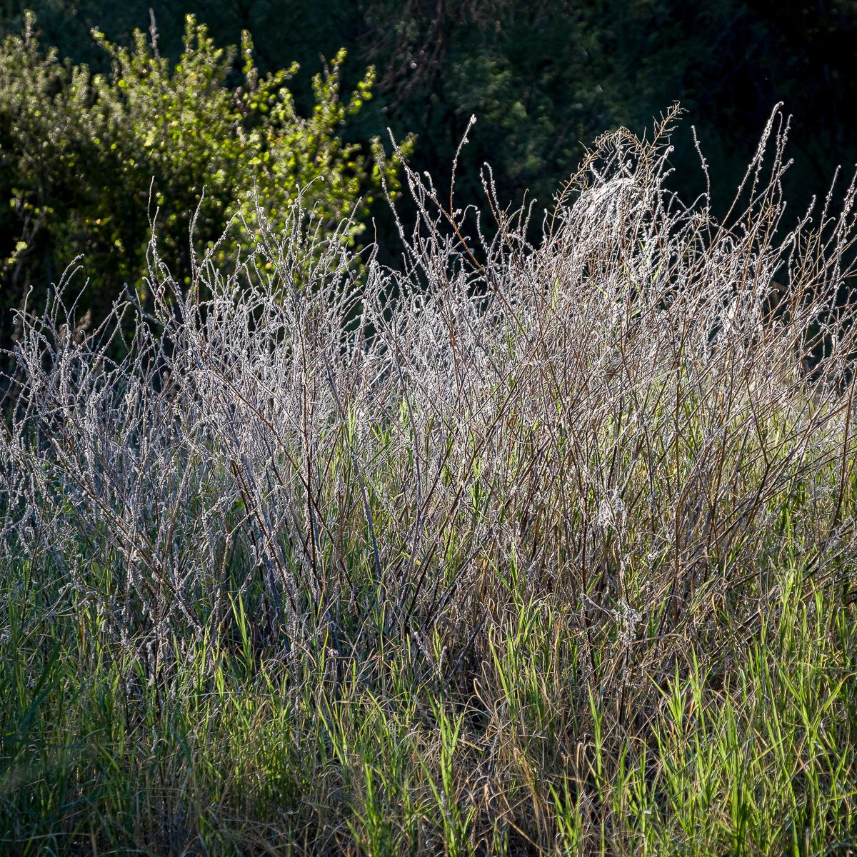 In An Oracle Woods 2021 Calendar-June-James Cowlin Photographs