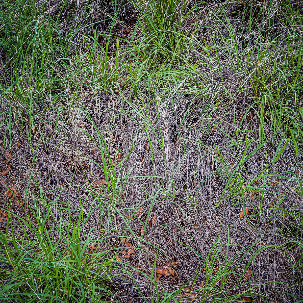 In An Oracle Woods 2021 Calendar-November-James Cowlin Photographs