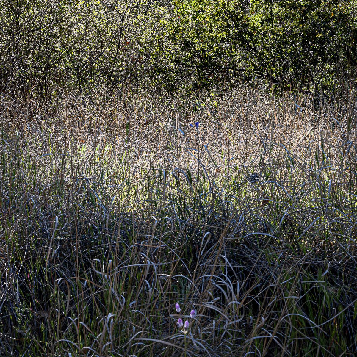In An Oracle Woods 2021 Calendar-October-James Cowlin Photographs