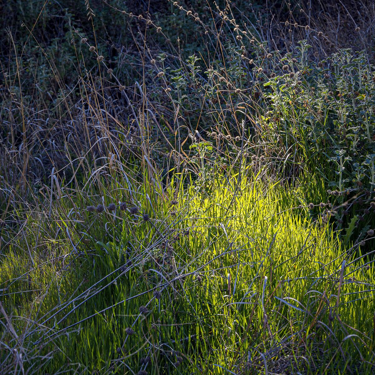 In An Oracle Woods 2021 Calendar-September-James Cowlin Photographs