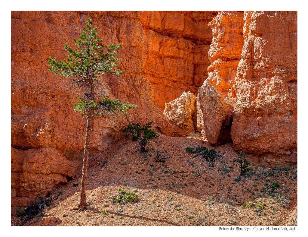 US Route 89 2021 Calendar-June-Below the Rim, Bryce Canyon National Park, Utah